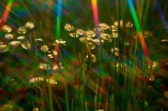 rainbow light 3