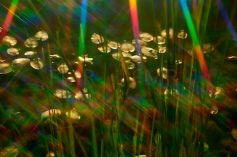 rainbow light 3