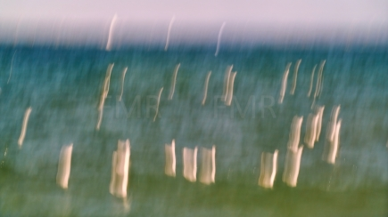 Seagulls dancing on Lake Constance 2