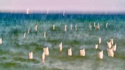 Seagulls dancing on Lake Constance 3