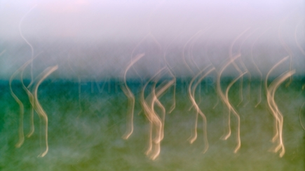 Seagulls dancing on Lake Constance 10